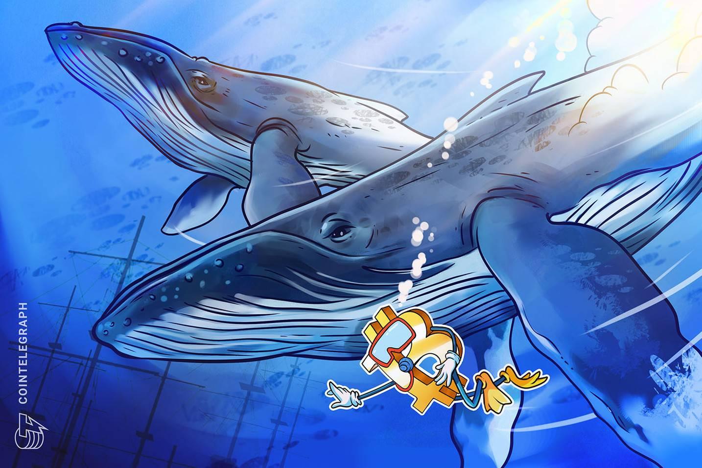 鲸鱼集群分析丨比特币正处于暴风雨来临前的平静